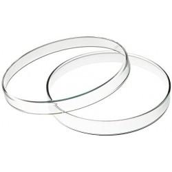 Placa Petri de vidrio